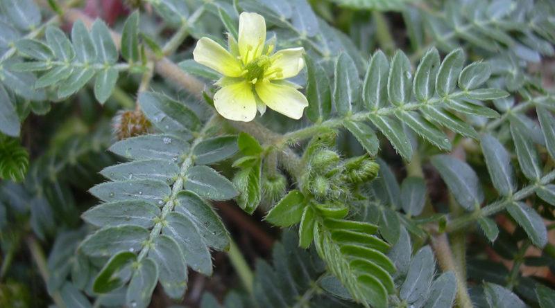 Fotó: Forest & Kim Starr/Wikipédia