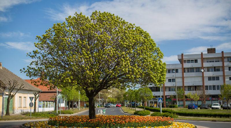 A körforgó tavasszal. Fotó: Babai István/Paksi Polgármesteri Hivatal